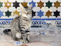 Cat sitting in front of an old tiled wall Royalty Free Stock Photo