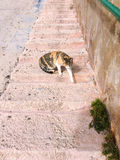 cat sitting on front steps of old house with stone walls Royalty Free Stock Image