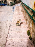 cat sitting on front steps of old house with stone walls Royalty Free Stock Photo