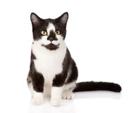Cat sitting in front.  on white background Royalty Free Stock Image