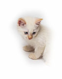 Cat sitting in front of white background Stock Photography