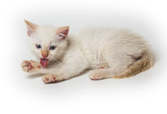 Cat sitting in front of white background Royalty Free Stock Photo