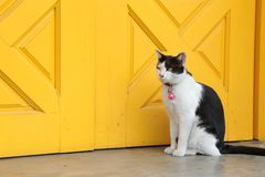 Cat sitting in front of yellow door Royalty Free Stock Image