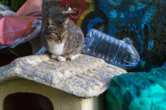 Cat sitting on the garbage dump. Stock Image