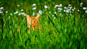 Cat sitting in garden of grass and flowers Royalty Free Stock Photos