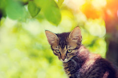 Cat sitting in the garden Royalty Free Stock Image