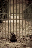 Cat sitting at a gate Stock Photo