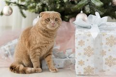Cat with christmas tree and gift Royalty Free Stock Image