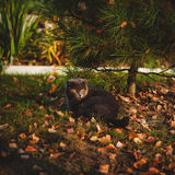 Cat. Sitting on a grass on autumn day Stock Images