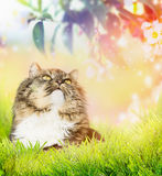 Cat is sitting in grass on background of flowering bush Stock Images