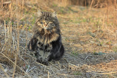 Cat sitting in grass Royalty Free Stock Photography