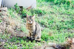 Cat sitting on the grass happy stock photography