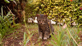 Cat sitting in the grass Royalty Free Stock Photography