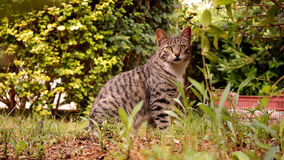 Cat sitting in the grass Stock Photos