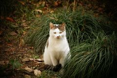 Cat Sitting Beside Green Grass Royalty Free Stock Photo