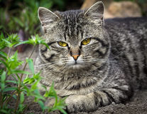 Cat sitting in green grass Royalty Free Stock Photography