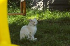 Cat Sitting On Green Grass blanca Imágenes de archivo libres de regalías