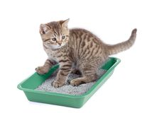 Cat sitting in green litter box isolated. On white Royalty Free Stock Photography
