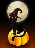 Cat sitting on Halloween pumpkin Royalty Free Stock Image