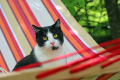Cat sitting in a hammock stock photos