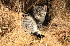 Cat sitting on hay Stock Photo