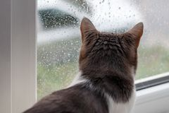 Cat sitting home and looking through the window at the autumn rain. And the car Royalty Free Stock Photography