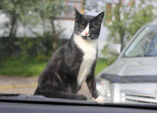 Cat sitting on the hood of a car Royalty Free Stock Photography