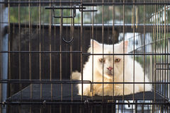 Cat sitting inside of cage Stock Photos