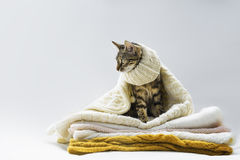 Cat sitting on a knitted things royalty free stock photo