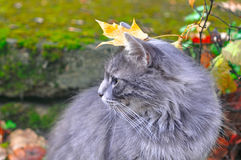 Cat sitting with a leaf on his head Royalty Free Stock Photo
