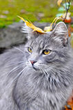 Cat sitting with a leaf on his head Stock Images