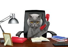 Cat sitting on leather chair with telephone. Isolated on white Stock Photo