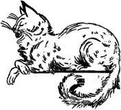 Cat Sitting On Ledge Stockfotos
