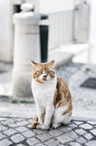Cat. A sitting cat in Lisbon Royalty Free Stock Photography