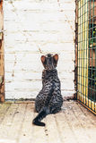 Cat sitting looking at a brick wall Stock Image
