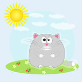Cat sitting in the meadow  basking in the sun. Royalty Free Stock Photos