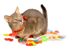 Cat sitting on multicolored paper hearts Royalty Free Stock Image