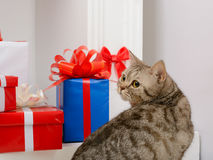 Cat sitting near Christmas presents Royalty Free Stock Image