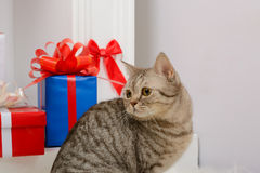 Cat sitting near Christmas presents Royalty Free Stock Photo