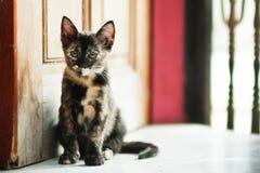 Cat sitting near door Royalty Free Stock Photo