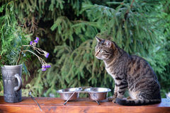 Cat is sitting near its bowl and waits for food Stock Image