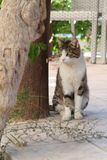 Cat sitting near a tree. Portret of a tabby cat with green eyes sitting near a tree trunk on a stone garden path royalty free stock photos