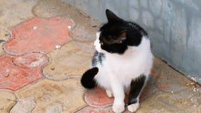 Cat Sitting Near The Wall adorable banque de vidéos