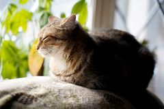 Cat sitting near window stock photo