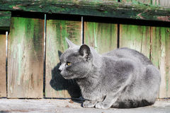 Cat sitting near wooden fence Royalty Free Stock Photo