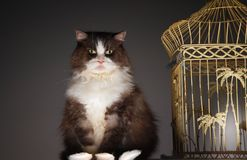 Cat Sitting Next To Birdcage Royalty Free Stock Image