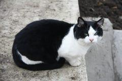 Cat Sitting noire sur le béton image stock