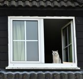 Cat sits in open window Stock Images