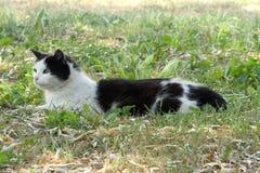 A cat sitting in an open field Stock Photo