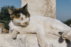 Cat Tanning. A cat sitting out in the midday sun in Ephesus Royalty Free Stock Image